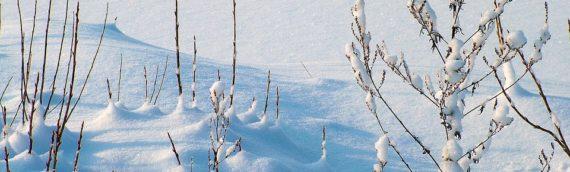 La llegada del invierno